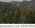 autumn, autumnal, forest 26007658