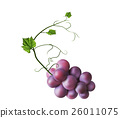 Fresh bunch of grapes purple 26011075