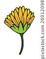 beautiful yellow chrysanthemum isolated 26012098