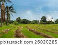 Combine harvester harvest ripe wheat on a farm  26020285