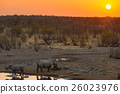Rare Black Rhinos drinking from waterhole, sunset 26023976