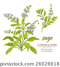 sage vector illustration 26026618