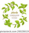 stevia, leaf, sweetleaf 26026619