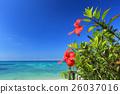 沖繩藍色海和藍天和紅色木槿 26037016