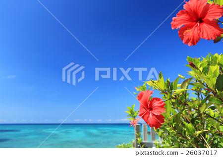 沖繩藍色海和藍天和紅色木槿 26037017
