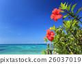 沖繩藍色海和藍天和紅色木槿 26037019