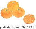 Mandarin orange 26041948