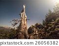 night sky behind silhouette of dead tree 26056382