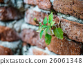 brick, grass, wall 26061348