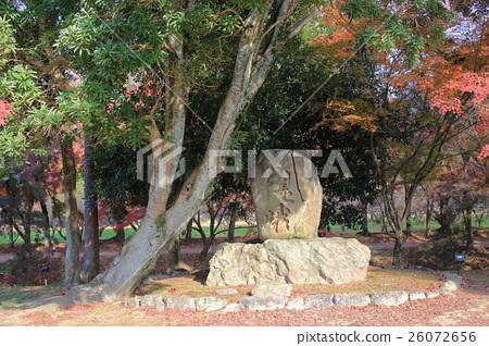 garden of Daikaku-ji, kyoto 26072656