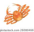 crab, crabs, aquarelle 26080466