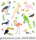 새, 조류, 세트 26093892