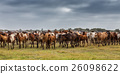 Herd of horses in the pasture goes to baptism. 26098622