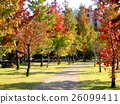가을, 공원, 산책 26099411