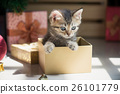 kitten playing in a gift box 26101779