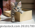 kitten playing in a gift box 26101780