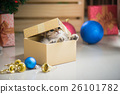 kitten playing in a gift box 26101782