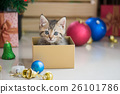 kitten playing in a gift box 26101786