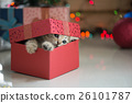 kitten playing in a gift box 26101787