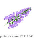 Purple flower. Sage.Vector. 26116841