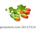 Ivy gourd, Coccinia grandis, Family Cucurbitaceae  26117314