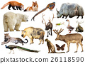 animal, collection, asia 26118590