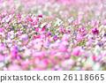花朵 花 花卉 26118665