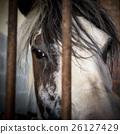 Sad eyes behind bars 26127429