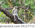 Monkey live in nature 26127712