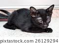 Dirty black kitten on garden floor 26129294