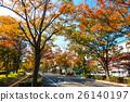 느티, 나무, 가로수 26140197