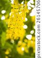 黄色 花朵 花卉 26145706