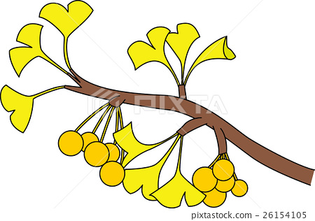 Gingko and fruit (with outline) 26154105