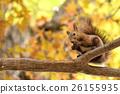 松鼠 北海道松鼠 日本北海道松鼠 26155935