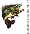 ปลากะพงปากกว้าง,รถบัส,ตกปลา 26170382