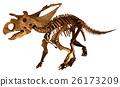 트리케라톱스 화석 골격 (배경 자르기) 26173209