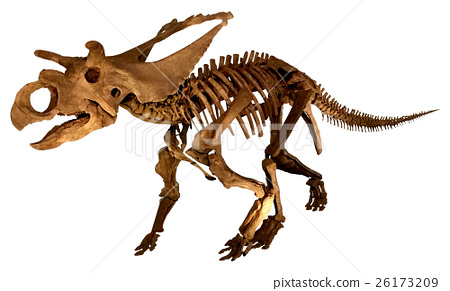 Triceratops fossil skeleton (background cutout) 26173209