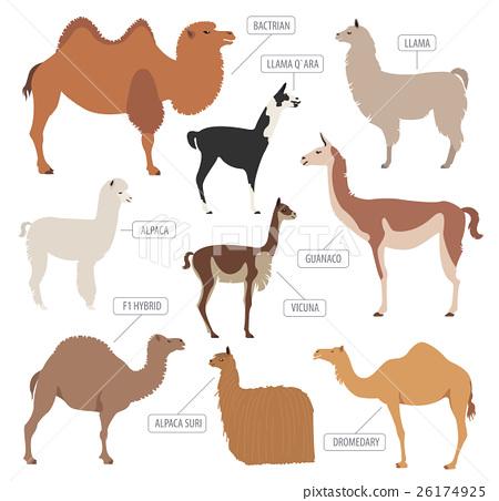 Llama Vs Alpaca And Guanaco