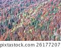 Deciduous and coniferous forest in autumn 26177207
