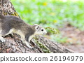 Squirrel sitting on the tree. 26194979