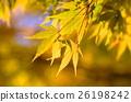 Autumn leaves 26198242