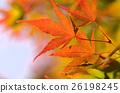 Autumn leaves 26198245
