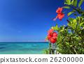 沖繩藍色haiku和開花在藍天的紅色hibiscuses 26200000