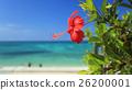 開花在藍天和藍天的紅色木槿在秋天射擊在2016年10月 26200001