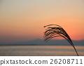 zebra grass, silver grass, lake biwa 26208711