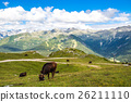 view of the Alps with a herd of cattle 26211110