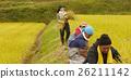 水稻收获风光 26211142