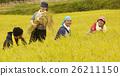 水稻收获风光 26211150
