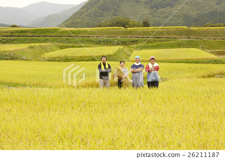 水稻收穫肖像 26211187