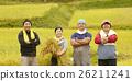 水稻收获肖像 26211241